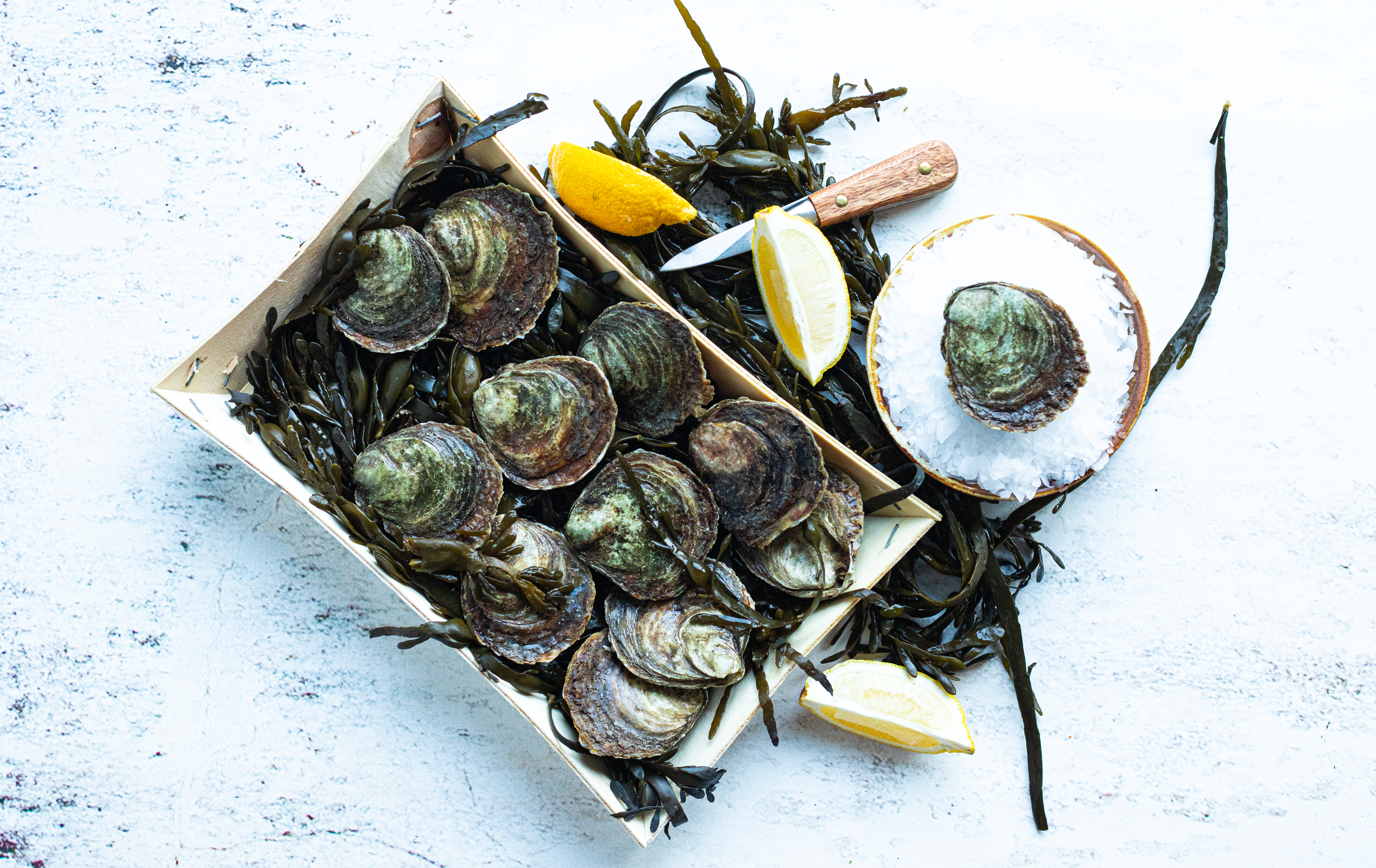 Zeeuwse platte oester 4° (12 stuks)